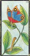 carte 13 Le Papillon