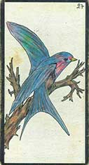 carte 27 L'Oiseau