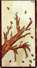 carte 55 L'automne