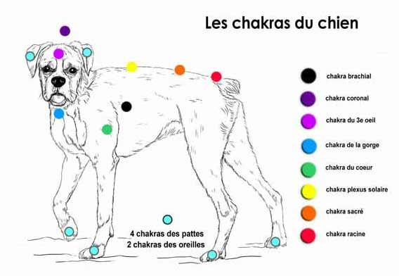 Lithothérapie et chakras animaux